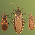 Abordaje farmacológico integral de la reactivación de la enfermedad de Chagas en pacientes con HIV/sida
